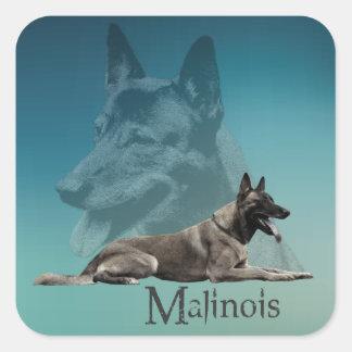 Sticker Carré Malinois - berger belge - Mechelaar - Maligator