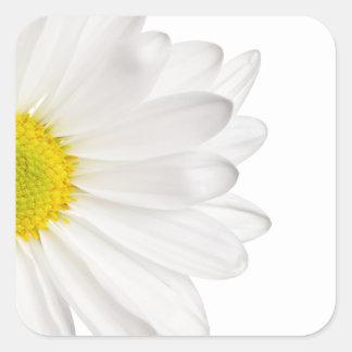 Sticker Carré Marguerites customisées par arrière - plan de
