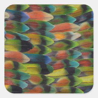 Sticker Carré Motif de plume de queue de perruche