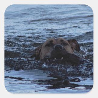 Sticker Carré Natation de chien en rivière