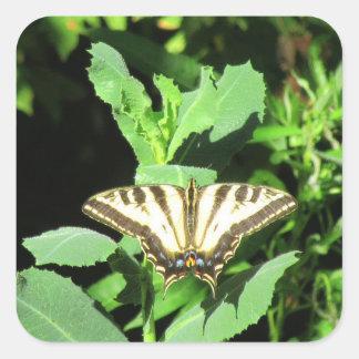 Sticker Carré Papillon, Folsom, la Californie