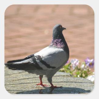 Sticker Carré Photographie de pigeon