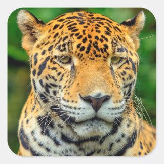 Sticker Carré Plan rapproché d'un visage de jaguar, Belize