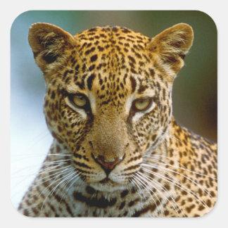 Sticker Carré Portrait de léopard