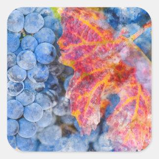 Sticker Carré Raisins sur la vigne pendant la saison d'automne