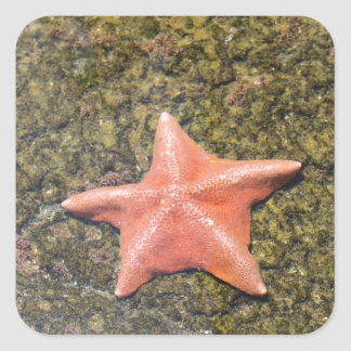 Sticker Carré starfish.JPG vivant