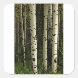 Sticker Carré Texture d'un portrait de forêt