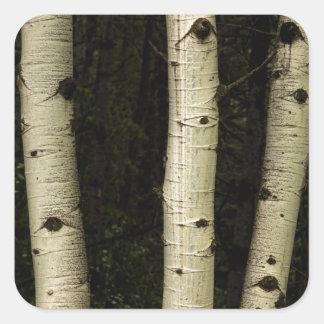 Sticker Carré Trois piliers de la forêt