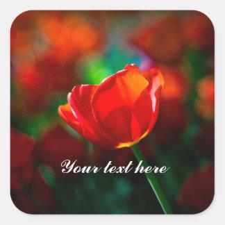Sticker Carré Tulipe rouge - mystère de la floraison