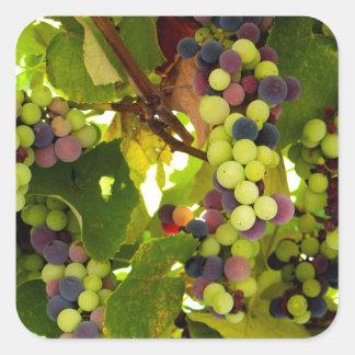 Sticker Carré Vin croissant