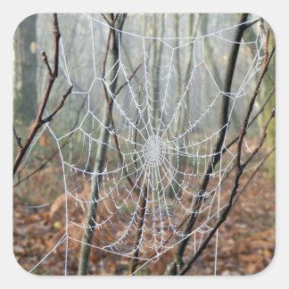 Sticker Carré Web d'autocollant européen d'araignée de jardin