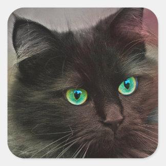 Sticker Carré Yeux verts de chat