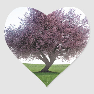 Sticker Cœur Cerisier de Sakura pendant le matin