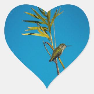 Sticker Cœur Colibri femelle de rubis-gorge sur l'arbre