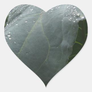 Sticker Cœur Gouttes de pluie sur le feuille de chou-fleur