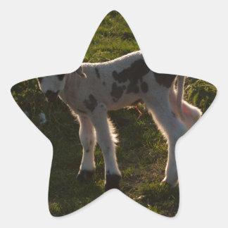 Sticker Étoile Agneau nouveau-né