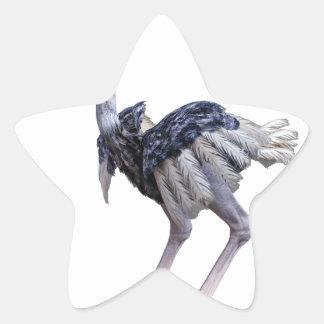 Sticker Étoile Autruche