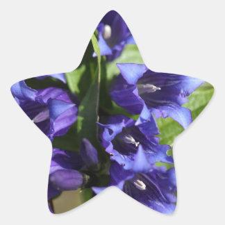 Sticker Étoile Gentiane de saule (asclepiadea gentiana)