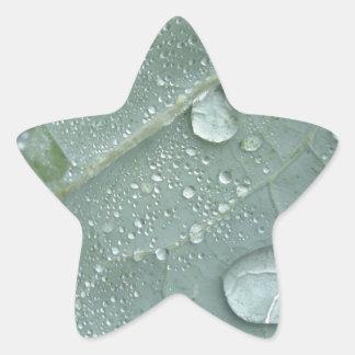 Sticker Étoile Gouttes de pluie sur le feuille de chou-fleur