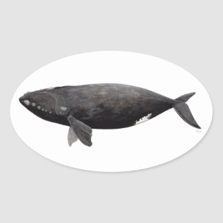 Sticker Ovale Baleine franche d'Atlantique