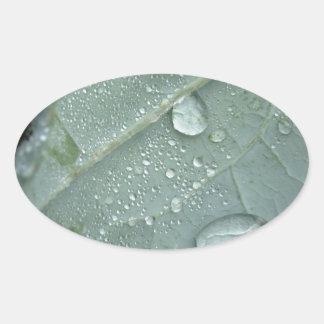 Sticker Ovale Gouttes de pluie sur le feuille de chou-fleur