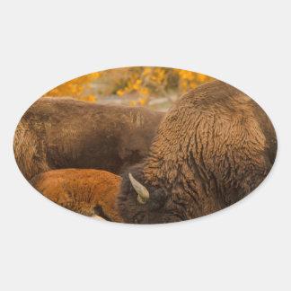 Sticker Ovale Nation de famille de bison