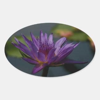 Sticker Ovale Nénuphar pourpre
