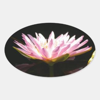 Sticker Ovale Nénuphar rose de Lotus