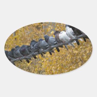 Sticker Ovale Pigeons