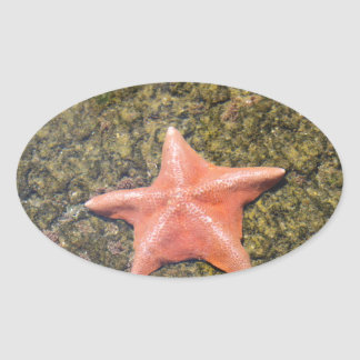 Sticker Ovale starfish.JPG vivant