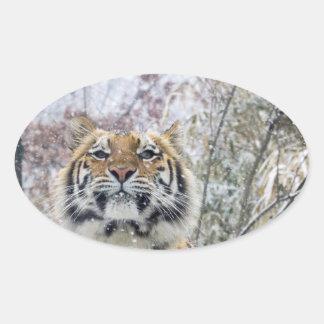 Sticker Ovale Tigre majestueux dans la neige
