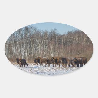 Sticker Ovale Troupeau de bison