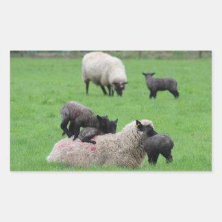 Sticker Rectangulaire Agneau et moutons de ressort