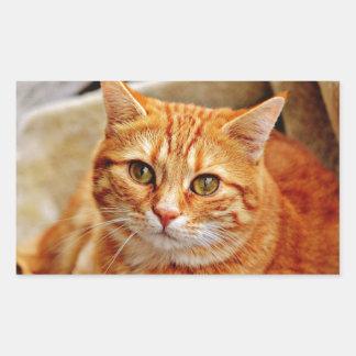 Sticker Rectangulaire Cute Orange Cat