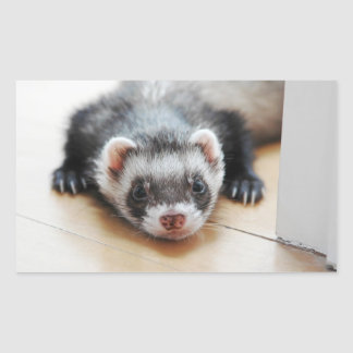Sticker Rectangulaire Furet de sable