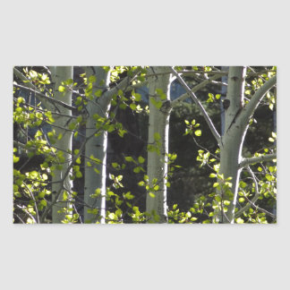 Sticker Rectangulaire Jeunes arbres d'Aspen