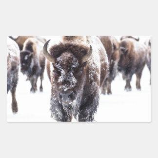 Sticker Rectangulaire La neige a couvert le bison, le parc national en