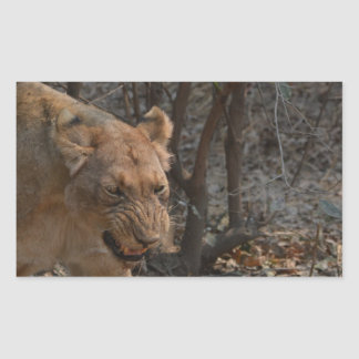 Sticker Rectangulaire Lionne de grondement