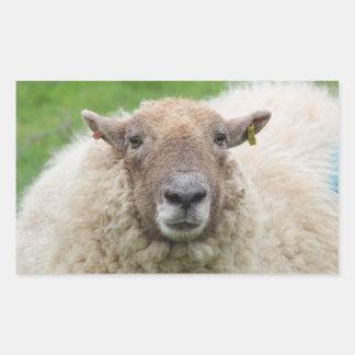 Sticker Rectangulaire Moutons de mère