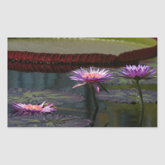 Sticker Rectangulaire Nénuphars pourpres Lotus