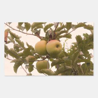 Sticker Rectangulaire Pommes sur le pommier