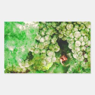 Sticker Rectangulaire Raisins verts employés pour faire le vin