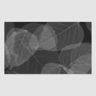 Sticker Rectangulaire Rayon X de feuille