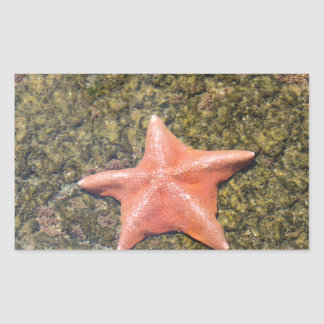 Sticker Rectangulaire starfish.JPG vivant