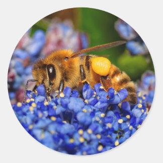 Sticker Rond Abeille occupée sur le lilas de la Californie