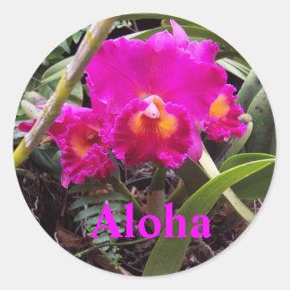 Sticker Rond Aloha orchidée