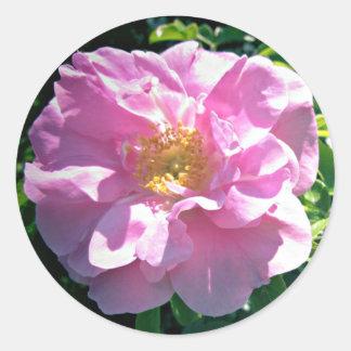 Sticker Rond Assez dans le rose de rose