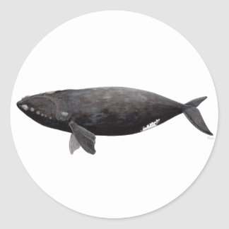 Sticker Rond Baleine franche d'Atlantique