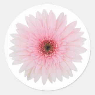 Sticker Rond Beau pâlissez - la fleur rose de marguerite de