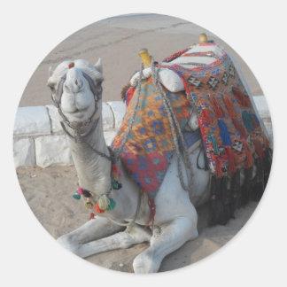 Sticker Rond Chameau de l'Egypte